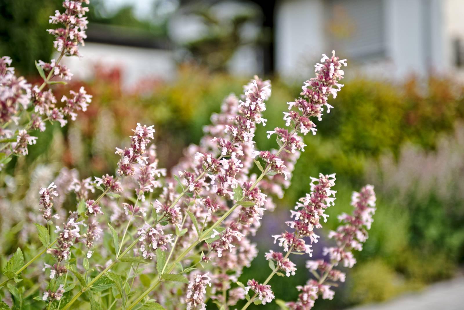 Für lebendige Gärten